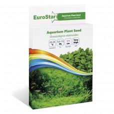 EuroStar Bitki Tohum Glossostigma Elatinoides